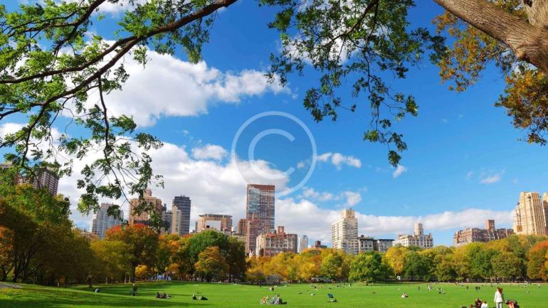 City Park Habitants Rescue